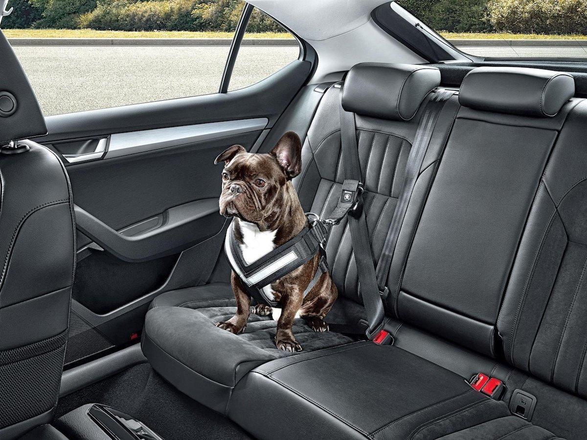 Autocasión MID Car vehículos segunda mano Madrid, Torrejón de Ardoz, puedo llevar mi perro en el coche